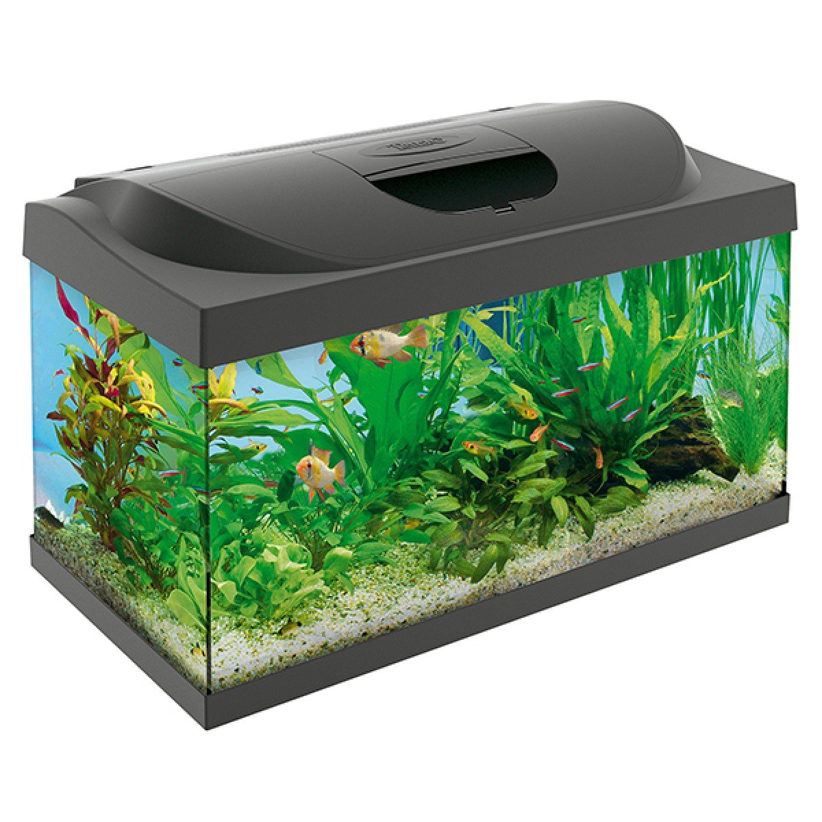 tetra starter line aquarium 54l homeleigh garden centres. Black Bedroom Furniture Sets. Home Design Ideas