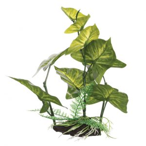 Fluval Anubias Gracilis 22cm Plant