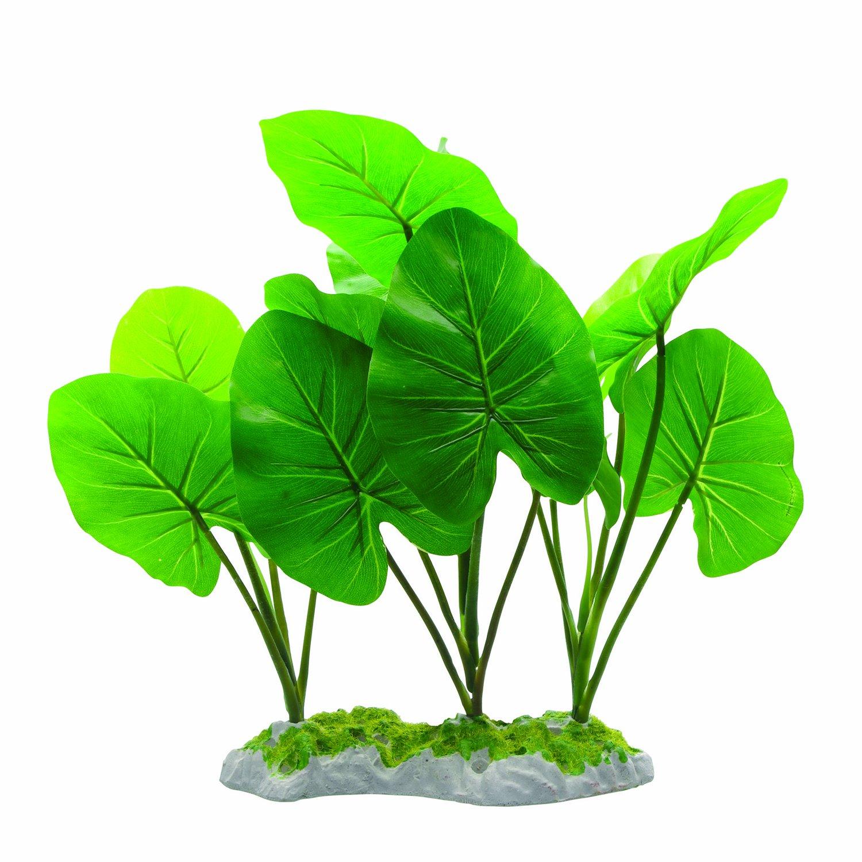 Fluval Echinodorus Plant 29cm With Moss Base
