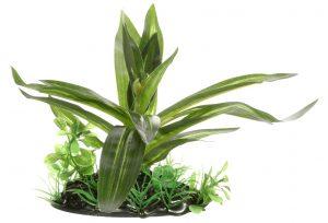 Fluval Giant Sagittaia 10cm Plant
