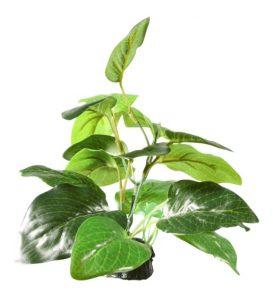 Fluval Samolus Sword 7cm Plant