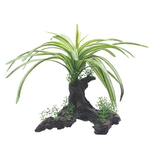 Fluval Fountain Plant 25cm On Root