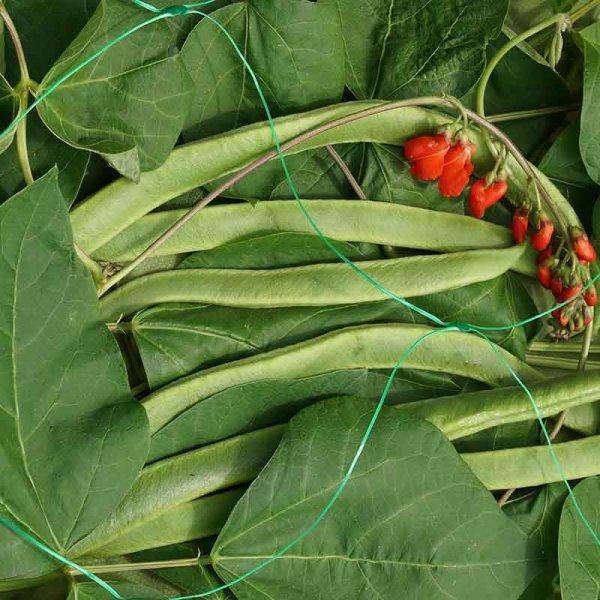 Smart Garden Pea & Bean Netting - Green 150mm - 2 x 10m