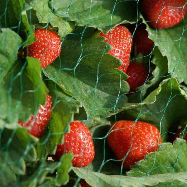 Garden Fruit Netting - Green 15mm - 2 x 10m