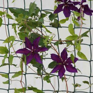 Smart Garden Climbing Plant & Fencing Mesh - Green 50mm - 0.5m x 5m