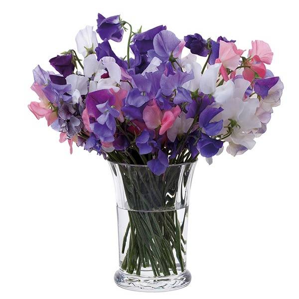 Dartington Crystal Florabundance Sweet Pea Vase