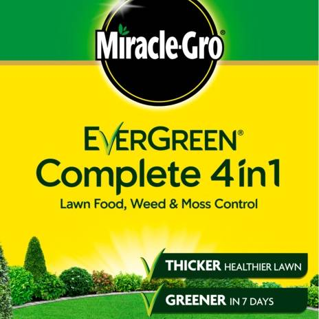 Evergreen Complete 4-in-1 80M + 25% Extra Free