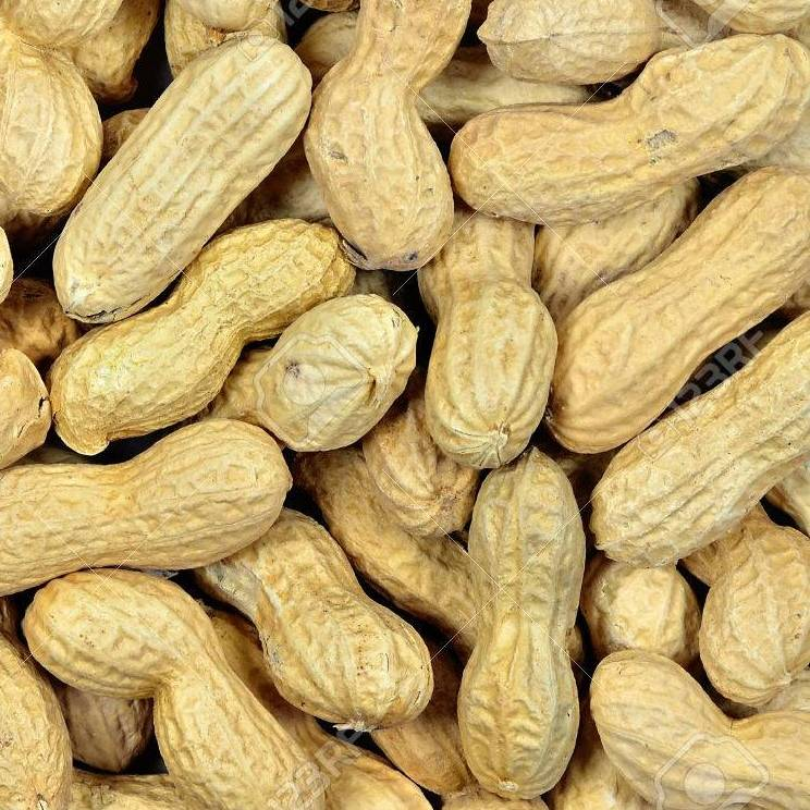 Johnston & Jeff Monkey Nuts 12.5kg