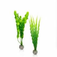 Oase BiOrb Easy Plant Set - Medium - Green (46056)