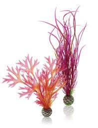 Oase BiOrb Plant Set - Medium - Red & Pink (46058)