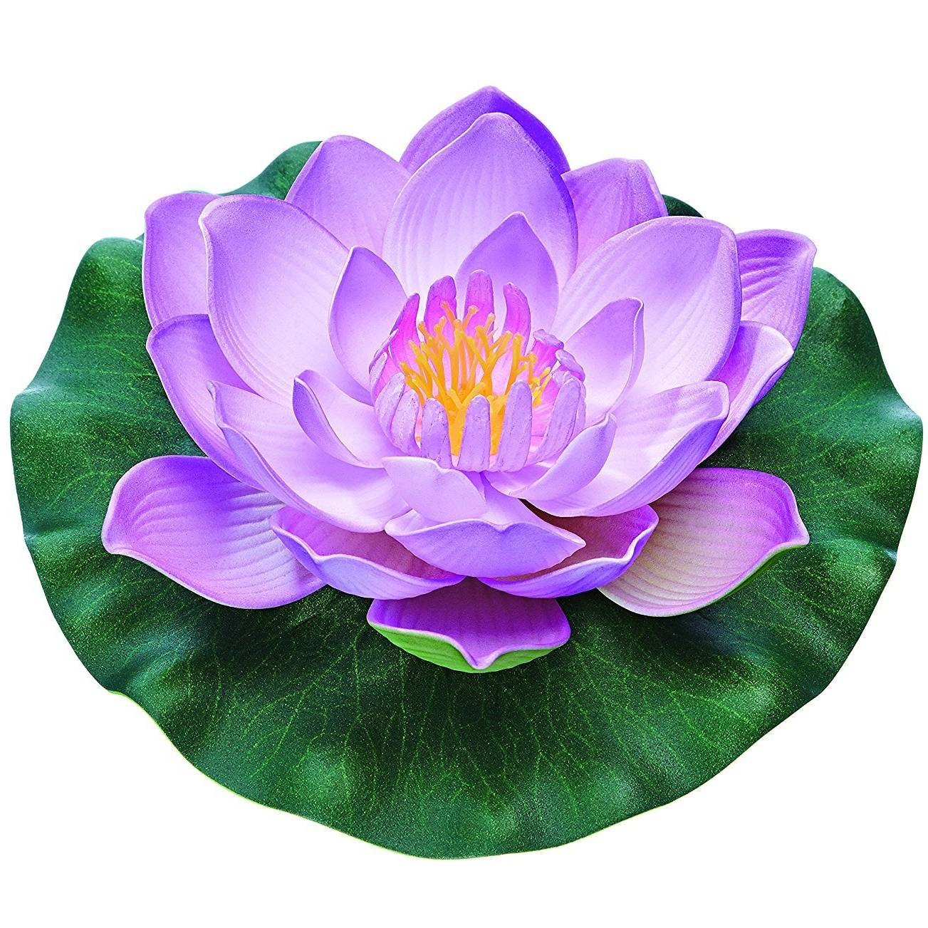 Pontec Pondo Lily purple