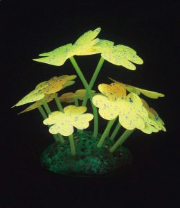 Classic Aqua Lumo Yellow Clover Starry Plant Pack