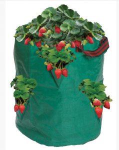 Garland Strawberry/Herb Growing Bag - Green (38x18cm)